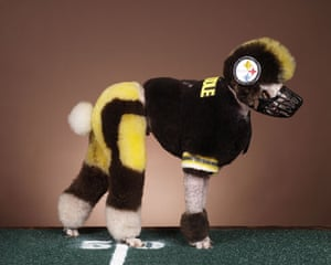 Poodles: Football poodle