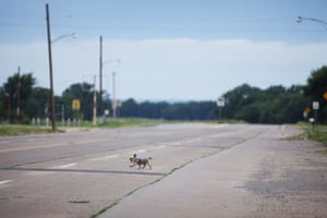 Route 66 Day 2: A dog crossing Route 66 near Erick, Oklahoma