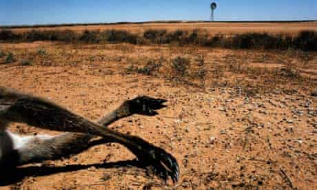 Monbiot Blog: A kangaroo lies dead during drought in southwest New South Wales