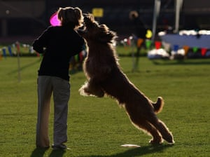 24 hours in pictures: Karlsruhe, Germany: the German dog frisbee championship