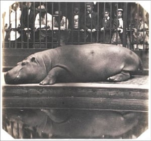 Points of View book: The hippopotamus at the Zoological Gardens, Regent's Park, London, 1852.