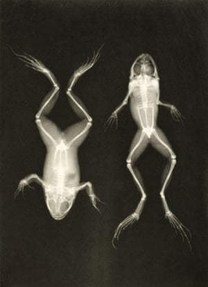 Points of View book: X-ray photograph of frogs, 1890s