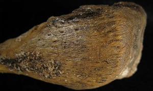 Cut marks on a 9,000-year-old human arm bone from Kents Cavern