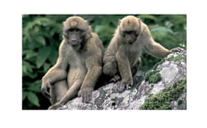 The Eastern Himalayas: New species discovered by WWF: Arunachal macaque