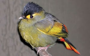 The Eastern Himalayas: New species discovered by WWF: Asian babbler