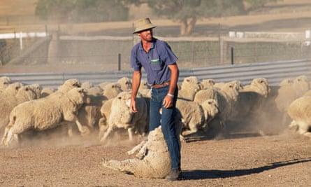 Australian sheep farmer