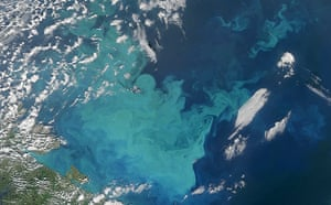 Satellite Eye on Earth: phytoplankton in waters of the Barents Sea, Russia