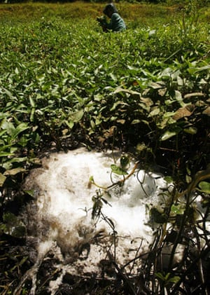 Week in Wildlife:  a polluted pond from palm oil factory,  Indonesia's South Sulawesi