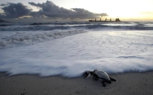 Week in Wildlife: A dead penguin due to oild spill from bulk carrier MV SELI 1 near Cape Town