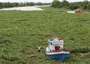 Week in Wildlife: Tha Chin river is being plagued in the mass of water hyacinth, Thailand