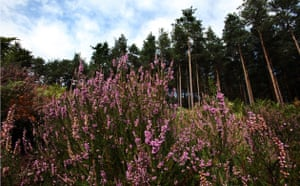 Week in Wildlife: The RSPB Farnham Heath nature reserve