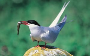 Week in Wildlife: Seabirds have best breeding year in a decade