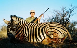 Trophy hunting in Africa: The zebra