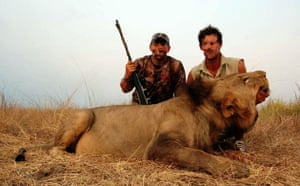 Trophy hunting in Africa: Lion
