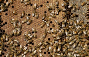24 hours in pictures: Honeybees swarm on a comb in a beehive  in southern Israel