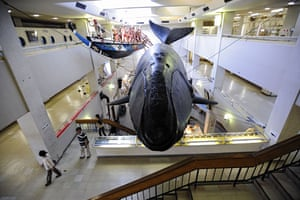 Dolphins in Japan: Visitors walk around the whaling museum in Taiji