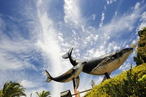 Dolphins in Japan: Giant whale models mark the entrance to the centre of Taiji in Japan