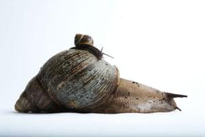 Guinness World Records: Guinness World Records Largest snail