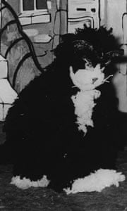 Sadie Corré pantomime cat