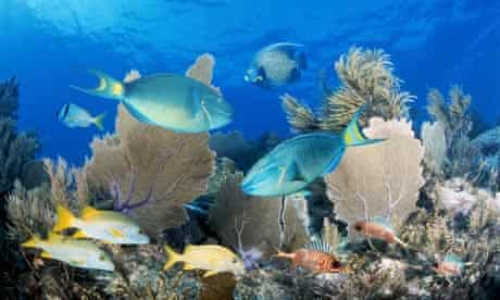 Coral reef : Fish on coral reef in Key Largo, Florida Keys, US.