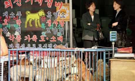 Dogs for sale in South Korea