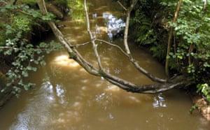 State of English rivers: River Medway, Pooh sticks Bridge, Ashdown Forest, Kent, Britain