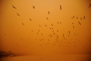 Sydney dust storm: Seagulls take flight in the high winds at Bondi Beach