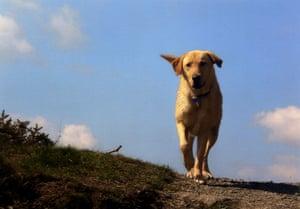 Dog photographer: Dog photographer of the year 2009