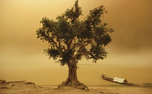 Dust storm: Tree in Sand storm on Niger River