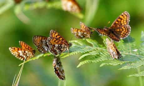 Butterflies return to Blean Woods