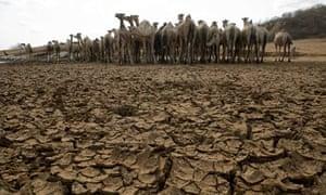 Drought starts to bite in Kenya