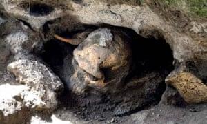 Fossil skull of Homo erectus discovered in Georgia