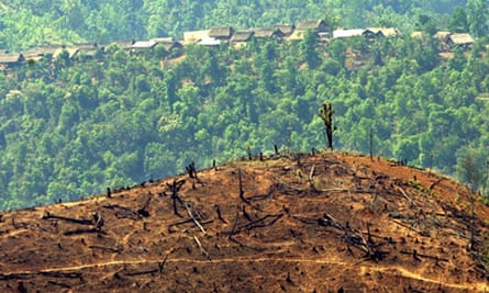 Teak deforestation burma