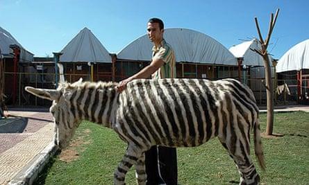 Mahmoud Barghout with fake zebra