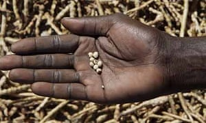 A Katine farmer holding seeds