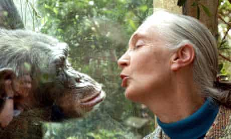 Jane Goodall, the world's foremost authority on chimpanzees