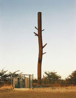 Mobile phone mast trees: Hundon Haverhill, Great Britain