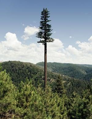Mobile phone mast trees: Mono Lake, California, USA