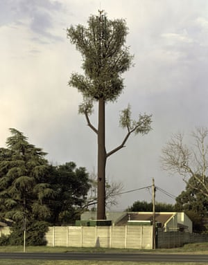 Mobile phone mast trees: Norscot Sandton, South Africa