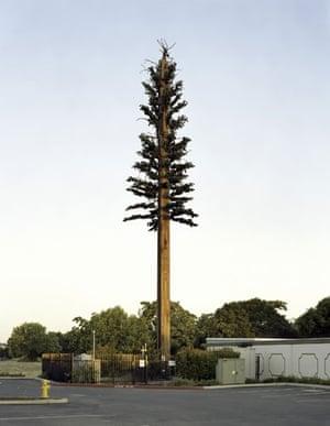 Mobile phone mast trees: Sacramento, California, USA
