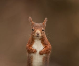 BWPA: Red Squirrel by Steward Ellett