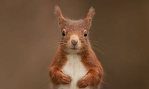 Red squirrel by Steward Ellett