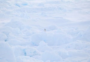 24 hours in pictures: Cape Burks, Antarctica: An Adelie penguin sits amongst the ice