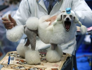 24 hours in pictures: 2010 Chiba International Dog Show