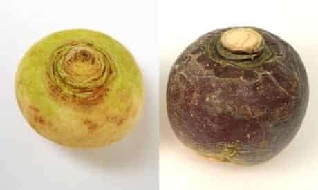 Turnip swede