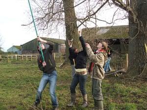 Black Poplars: Conservation work on the black poplars at Dunster