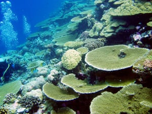 Chagos: Chagos archipelago worlds largest coral atolls