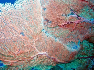 Chagos Archipelago: Chagos Archipelago