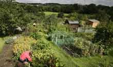 Allotments in Haringey, London