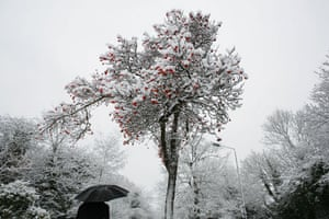 Winter weather: West Wickham, Kent, 6 January: Red berries on a snow covered tree
